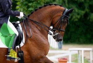 equitazione-podologo-podologia-sanremo1
